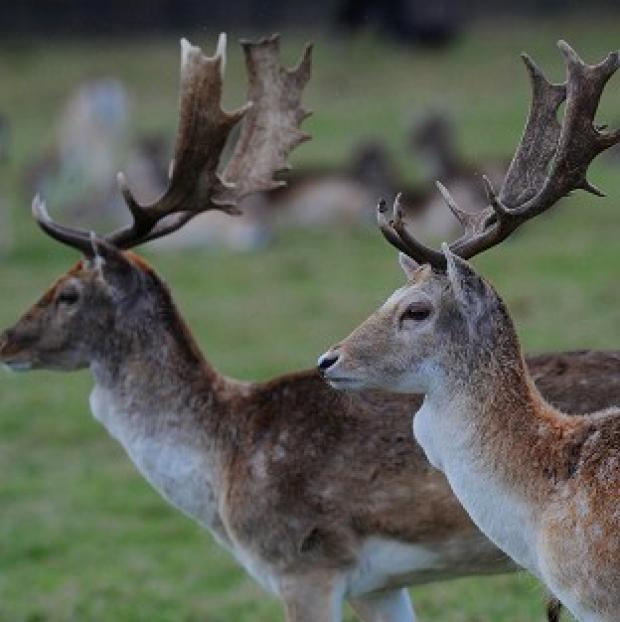 A widespread and comprehensive culling of wild deer is needed to keep the population under control, an expert has warned