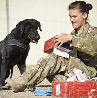 Private Zina Saunders, a dog handler with 1 Military Working Dogs, gives Hazel,