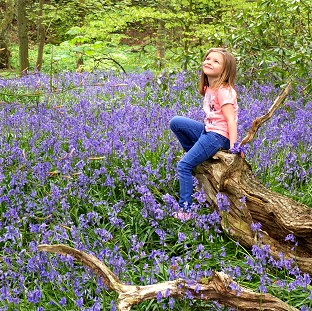 Kadie Lane, five, plays amongst the bluebells in Witton Country Park, Blackburn, Lancashire