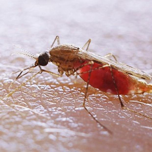 Blackpool Citizen: Fans have been warned about bugs that can spread diseases like malaria