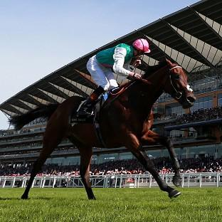 Kingman, pictured, finished ahead of old rival Night Of Thunder at Royal Ascot