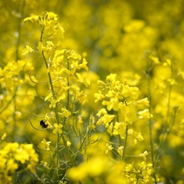 Blackpool Citizen: Hay fever is caused by allergy to pollens